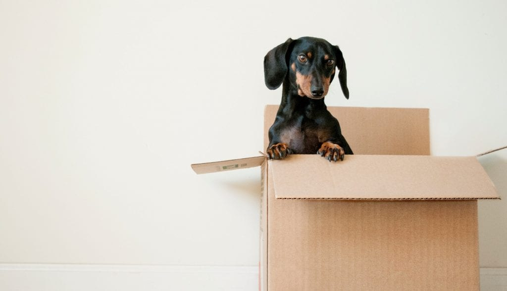 Moving house during COVID-19 restrictions